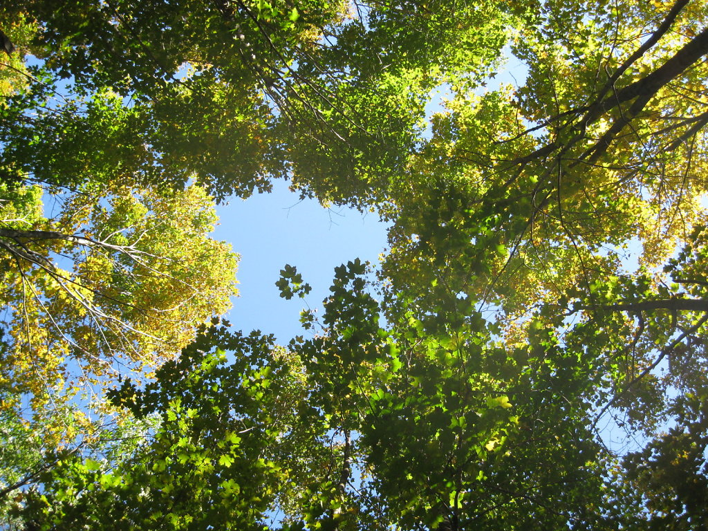 Tree-View-Up-IMG-2358.JPG