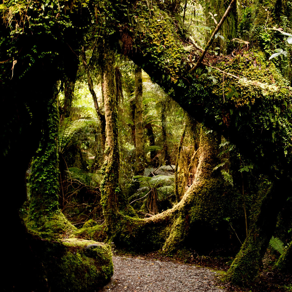 Path through rain forest #1, New Zealand