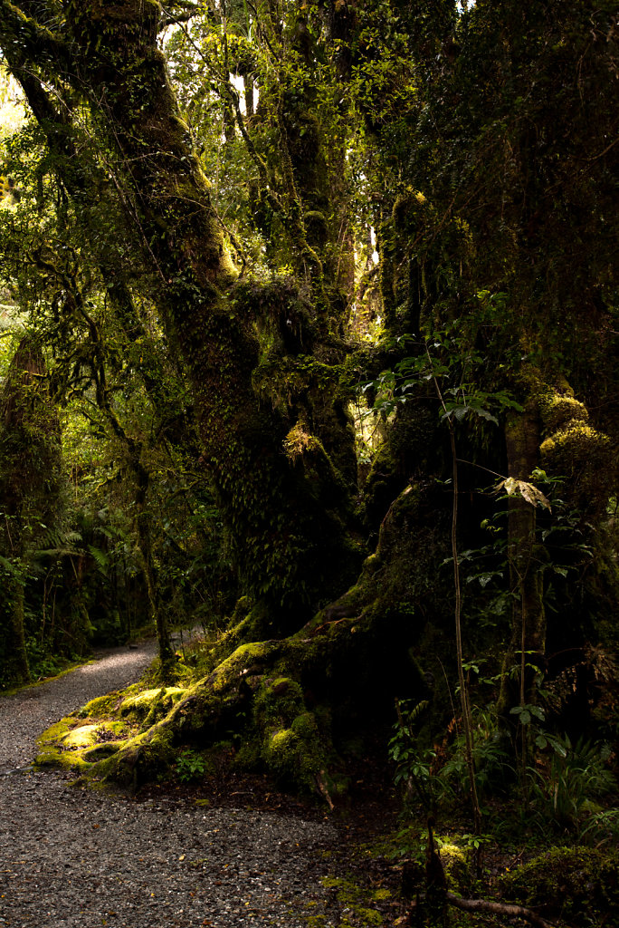 A path in a rain forest
