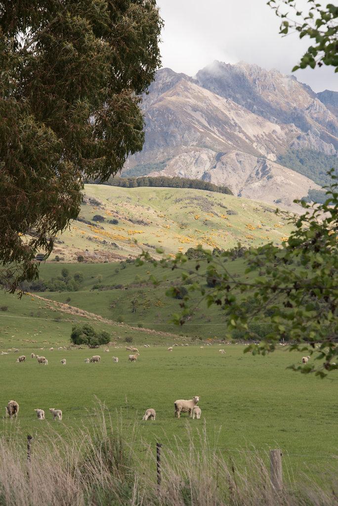 Pastureland 1