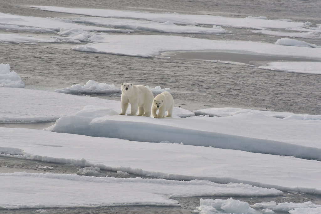 Arctic View, 2018