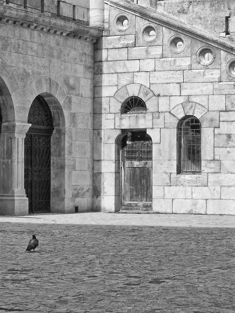 Pigeon in Courtyard