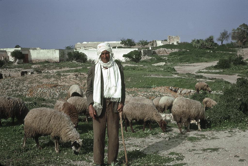 Tunisian Shepherd