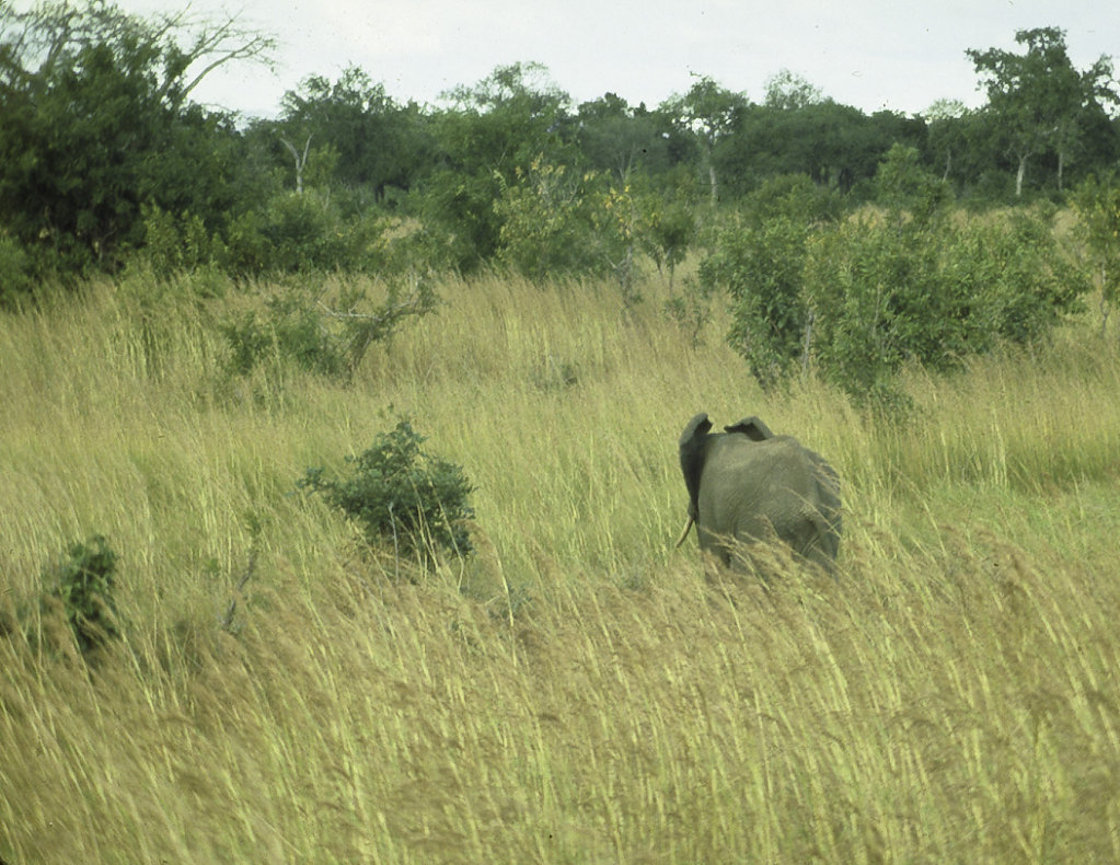 Elephant in Taita Hills, Kenya