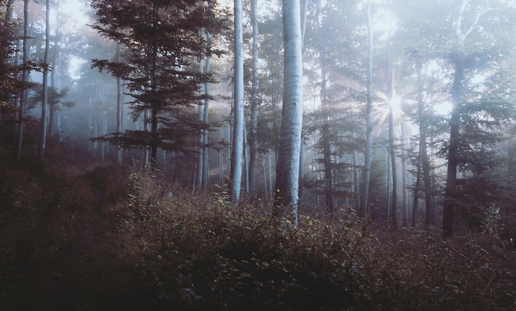 Dawn in the Wood, One of 4 by Guest S. Unrau