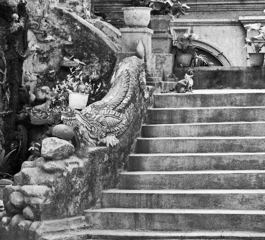 Cat on a Stair, Chiang Mai, Thailand