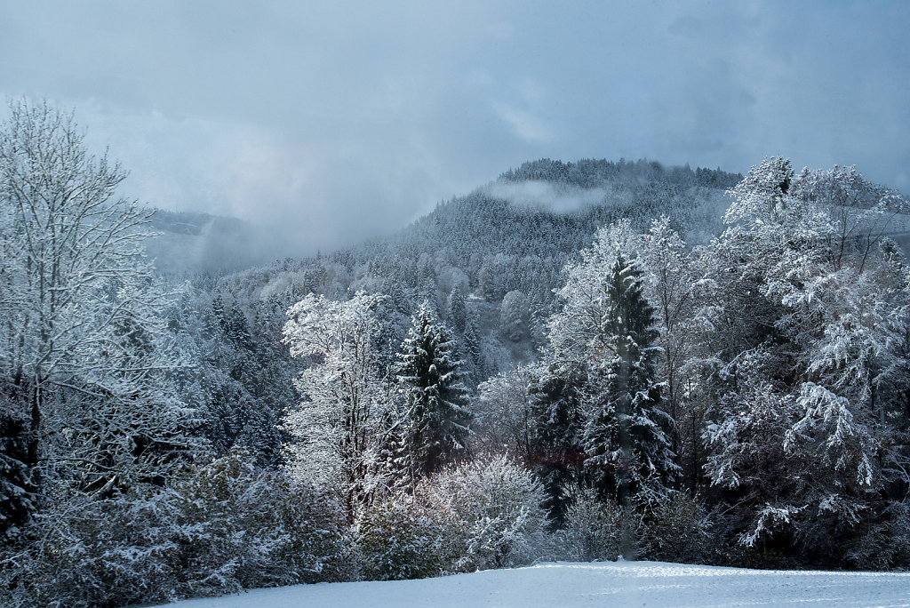 Black Forest Frost