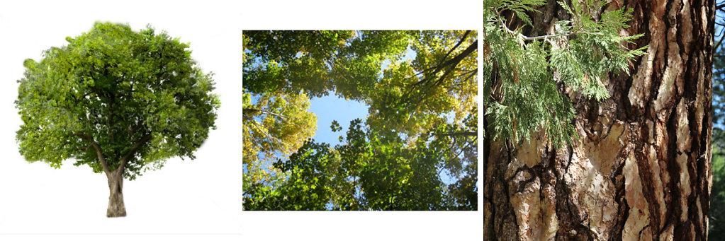 Three views of a tree