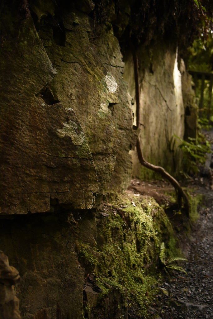 Light on forest path... light light light