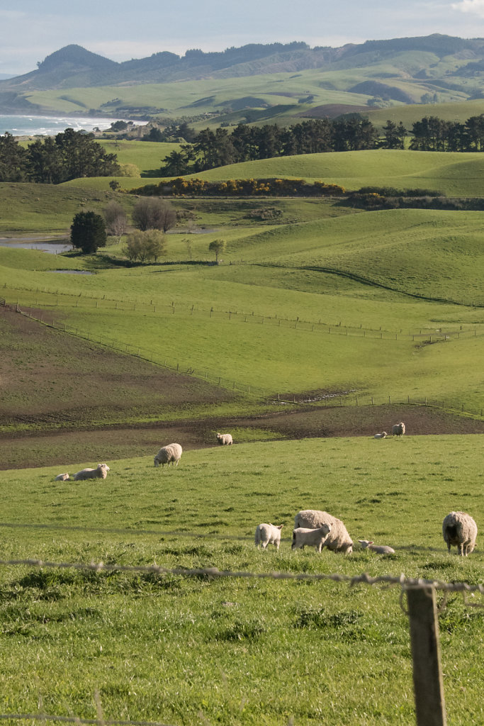 New Zealand Summary: pastureland,  mountains, water, and... sheep