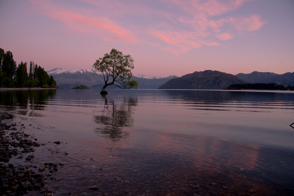 Famed Wanaka Tree