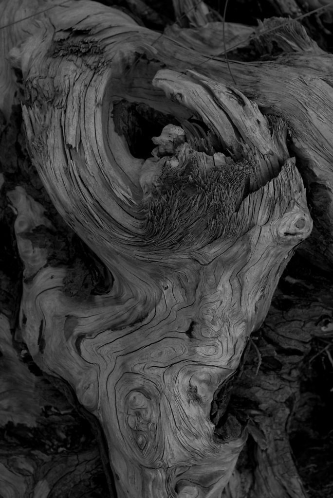 """Bones"" of a tree - a 'beach tree'"