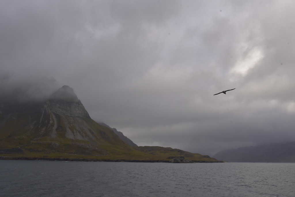 Everywhere you go in the Arctic: gulls