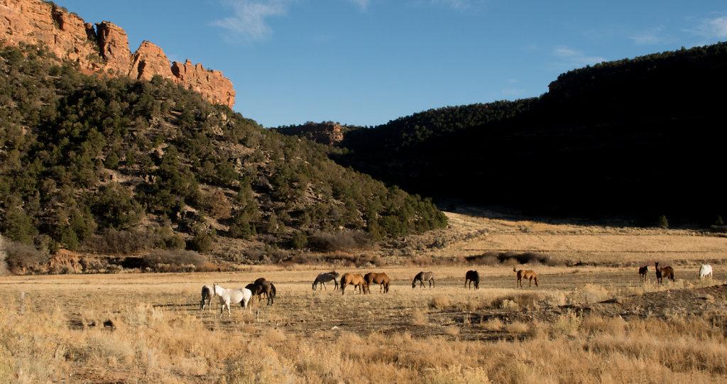 Grazing West-Central Colorado