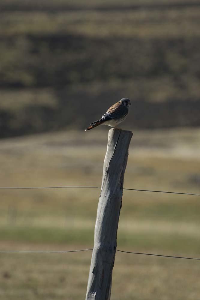 Posing on a pole