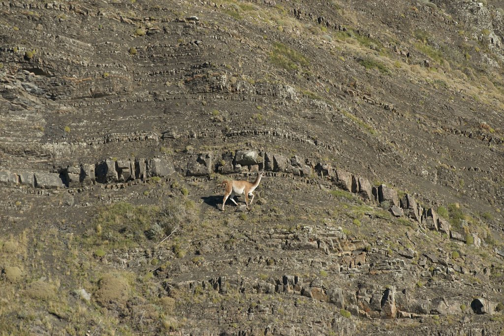 Guanaco next to interesting rock formation